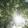 森林科学の分野